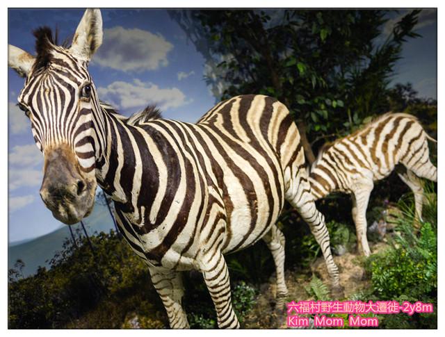 六福村野生动物大迁徙-全台最大动物标本特展